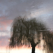 Karin Ubeleis-jones Prints - Weeping Willow Print by Karin Ubeleis-Jones