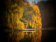 Weeping Willow Photos - Weeping Willow Pier by Michael L Kimble