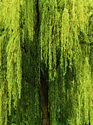 Garden Scene Digital Art Posters - Weeping Willow Tree Enchantment  Poster by Carol F Austin
