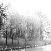 Weeping Willows By The Lake Print by AdSpice Studios