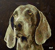 Dog Framed Prints - Weimaraner dog Framed Print by Dragica  Micki Fortuna
