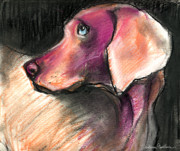 Dog Portraits Pastels Framed Prints - Weimaraner Dog painting Framed Print by Svetlana Novikova