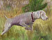 Collie Painting Framed Prints - Weimaraner Point Framed Print by Mary Jo  Zorad
