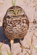 Owl Metal Prints - Welcome To My Planet Metal Print by Bruce J Robinson