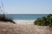 Florida Landscape Posters - Welcome to the Beach Poster by Carol Groenen