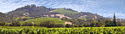 Grape Vineyards Prints - Welcome to Wine Country Print by Mike McGlothlen