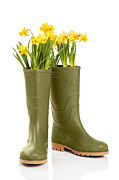 Daffodils Posters - Wellington Boots Poster by Christopher and Amanda Elwell
