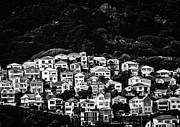 B Photo Prints - Wellington hillside Print by Constance Fein Harding