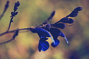 """blue Flowers"" Photos - Were Two of a Kind by Laurie Search"