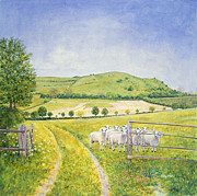 Meadow Paintings - Wessex Sheep by Ditz