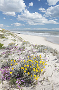 Western Cape Prints - West Coast Flowers Print by Neil Overy