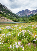 Adam Pender - West Elk Wildflowers
