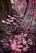 West Fork Fall Colors Print by Dave Dilli