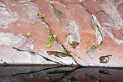 Tam Ryan - West Fork Oak Creek Abstract