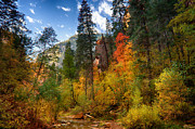 West Fork Photos - West Fork Wonders  by Saija  Lehtonen