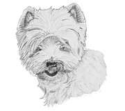 Pooch Drawings Posters - West Highland Terrier Drawing Poster by Catherine Roberts