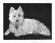 White Terrier Drawings - West Highland White Terrier by Jack Pumphrey