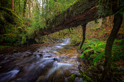Trunk Photos - West Humbug Creek by Everet Regal
