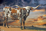 Texas Longhorn Photos - West of El Segundo 2 by Robert Anschutz