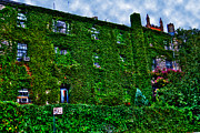West Village Prints - West Village Townhouse Ivy Print by Randy Aveille