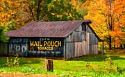 Chewing Tobacco Posters - West Virginia Barn oil Poster by Steve Harrington