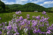 Phlox Metal Prints - West Virginia Serenity  Metal Print by Thomas R Fletcher