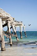 Western Birds Framed Prints - Western Australia Eucla Old Jetty Framed Print by Colin and Linda McKie