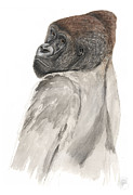 Gorilla Drawings - Western Lowland Gorilla - Gorilla gorilla - Great Ape - Primate - Gorille - Gorila - Goriluapa by Urft Valley Art