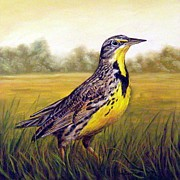 Meadowlark Paintings - Western Meadowlark Afternoon by Tom  Chapman