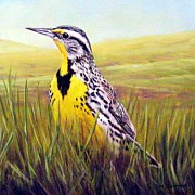 Meadowlark Paintings - Western Meadowlark by Tom  Chapman
