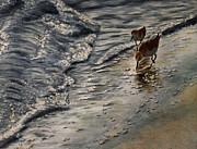Western Sandpiper Print by Carol Oberg Riley