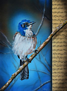 Scrub Jay Paintings - Western Scrub Jay by Lachri