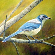 Scrub Jay Paintings - Western Scrub Jay by Tom  Chapman