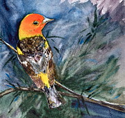 Tanager Originals - Western Tanager at Mt. Falcon Park by Beverley Harper Tinsley