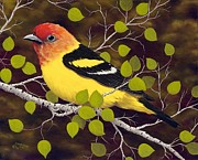 Rick Bainbridge - Western Tanager
