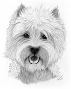 White Terrier Drawings - Westie by Carol Doran