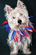 Westie Terrier Art - Westie Clown by Catherine Reusch  Daley