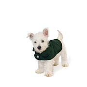Puppies Digital Art Metal Prints - Westie Puppy in a Coat Metal Print by Natalie Kinnear