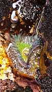 Tide Pools Framed Prints - Wet and Wild Framed Print by Ron Regalado