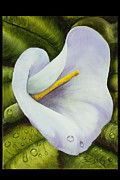 Calla Lilly Originals - Wet Calla Lilly by Tricia Eisen