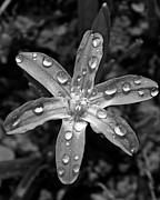 March Photos - Wet Glory of the Snow by Chris Berry