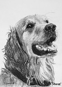 Akc Drawings Framed Prints - Wet Smiling Golden Retriever Shane Framed Print by Kate Sumners