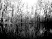 Shutter Happens Photography - Wetland Reflections