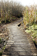 Marsh Path Framed Prints - Wetland walk Framed Print by Les Cunliffe