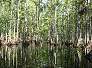 Cypress Stump Photos - Wetlands by Yajhyara Maria