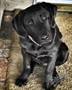 Puppy Photo Originals - Whaaat? by Torrie Ann Needham