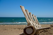 Whale Photo Originals - Whale Bones on the beach by Robert Bascelli