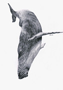 Whale Drawings Metal Prints - Whale Metal Print by Lucy D