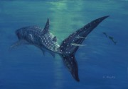 Fish Underwater Paintings - Whale shark by Tom Blodgett Jr