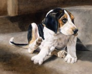 Foxhound Framed Prints - What Are Fleas Anyway Framed Print by Anita Baarns